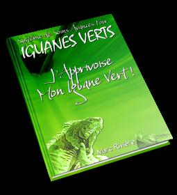 L'apprivoisement d'un iguane étudié de A à Z !
